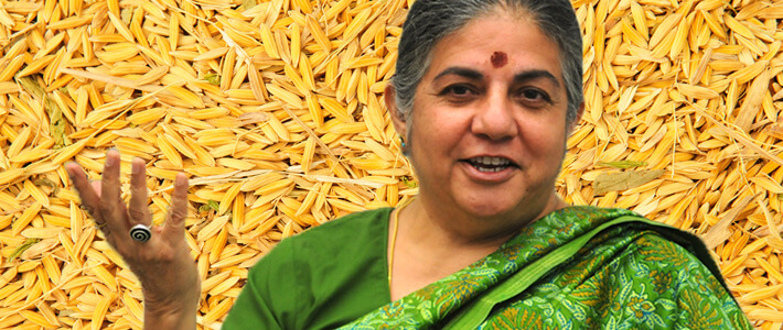 Vandana Shiva on Rice Background