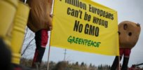 gmo europe greenpeace africa 437324