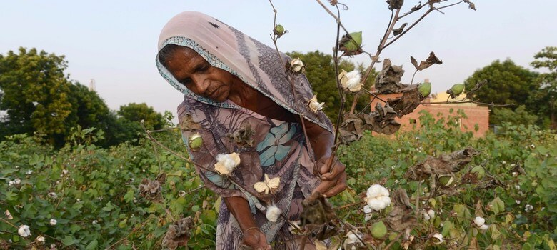 india cotton monsanto 82348