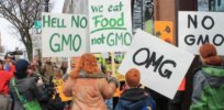 common sense must rule gmo controversy