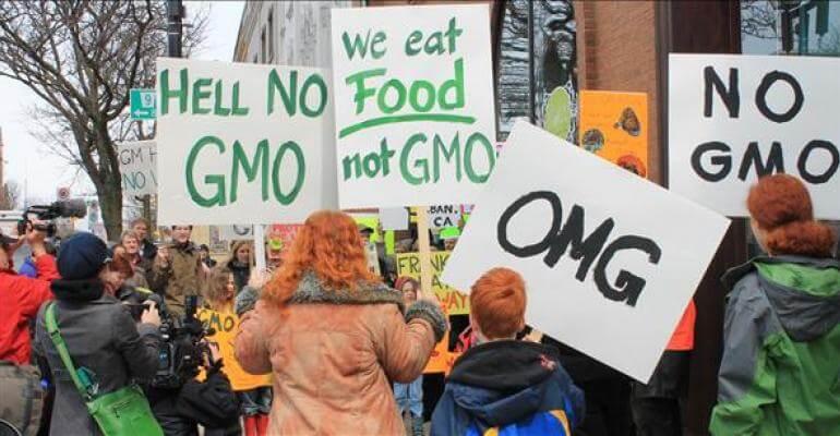 common sense must rule gmo controversy