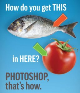 fish mythbuster e