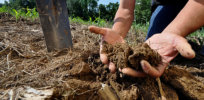 hands in soil crop
