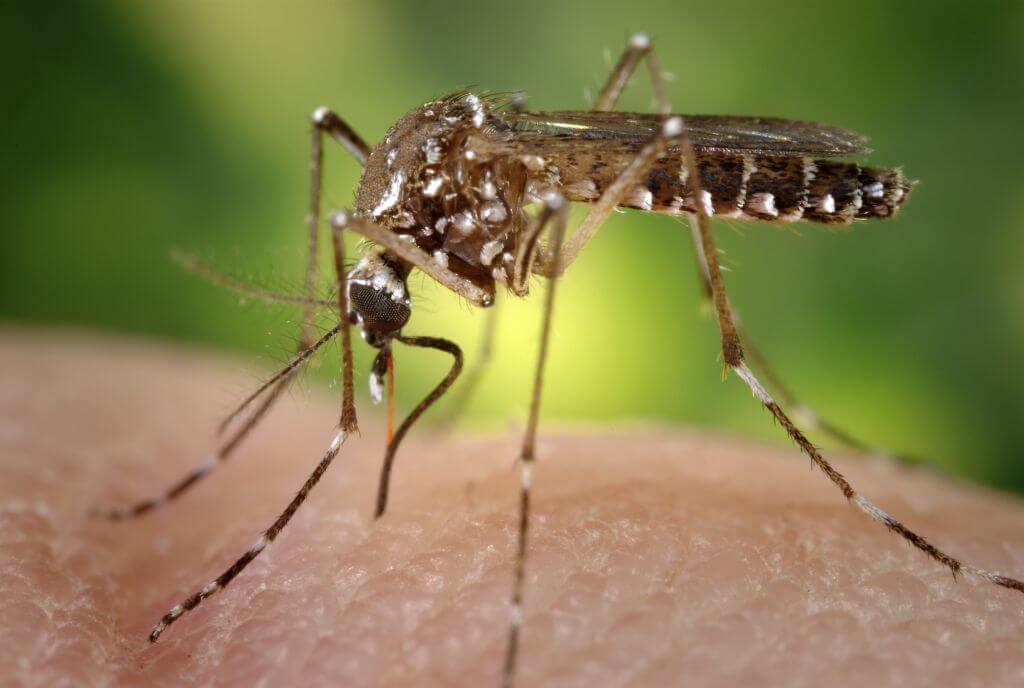 mosquito 2 18 18