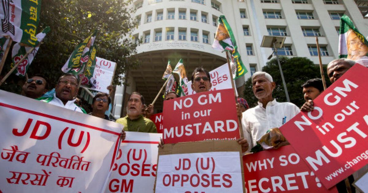 India GMO 834247