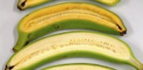 super banana GMO vitamin A 28347