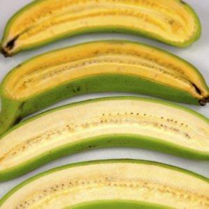 super banana GMO vitamin A 28347