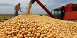 argentina gmo soybean seed 84327