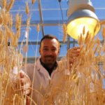 Video: NASA-inspired 'speed breeding' tricks crops into growing faster