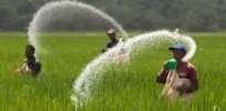 urea fertilizr
