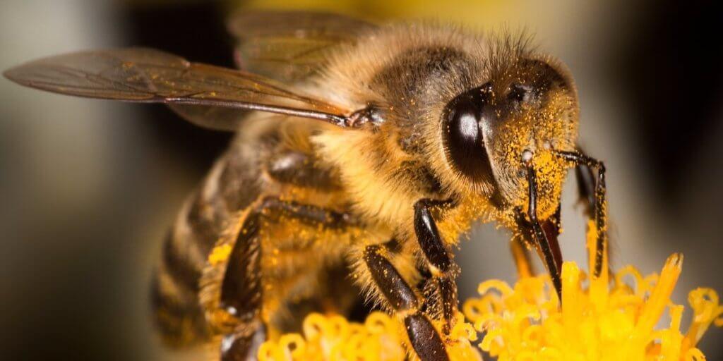 bees neonicotinoids 8327239