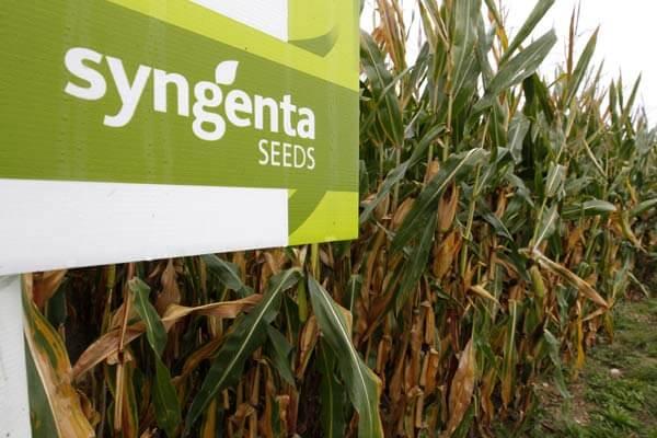 Syngenta agrees to pay $1 5 billion over GMO corn fiasco in