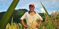 bolivia farmer 43277