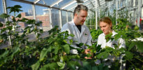 CALS PlantScience