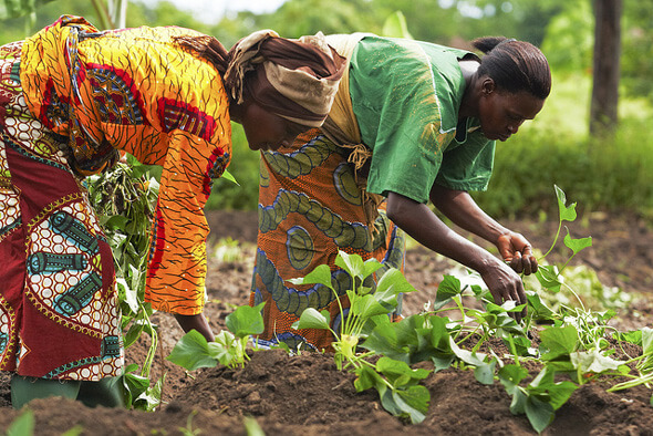 FAO farmers