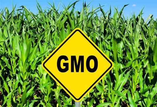 GMO term 432873