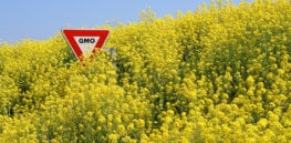 How Omega 3-fortified GMO canola can help save our oceans