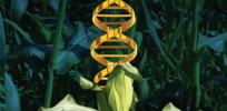 Screen Shot at AM