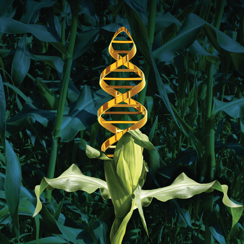 GMO regulations 47273