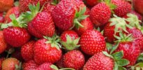 CRISPR gene edit strawberry fruit 43727