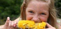 sweet corn 43277
