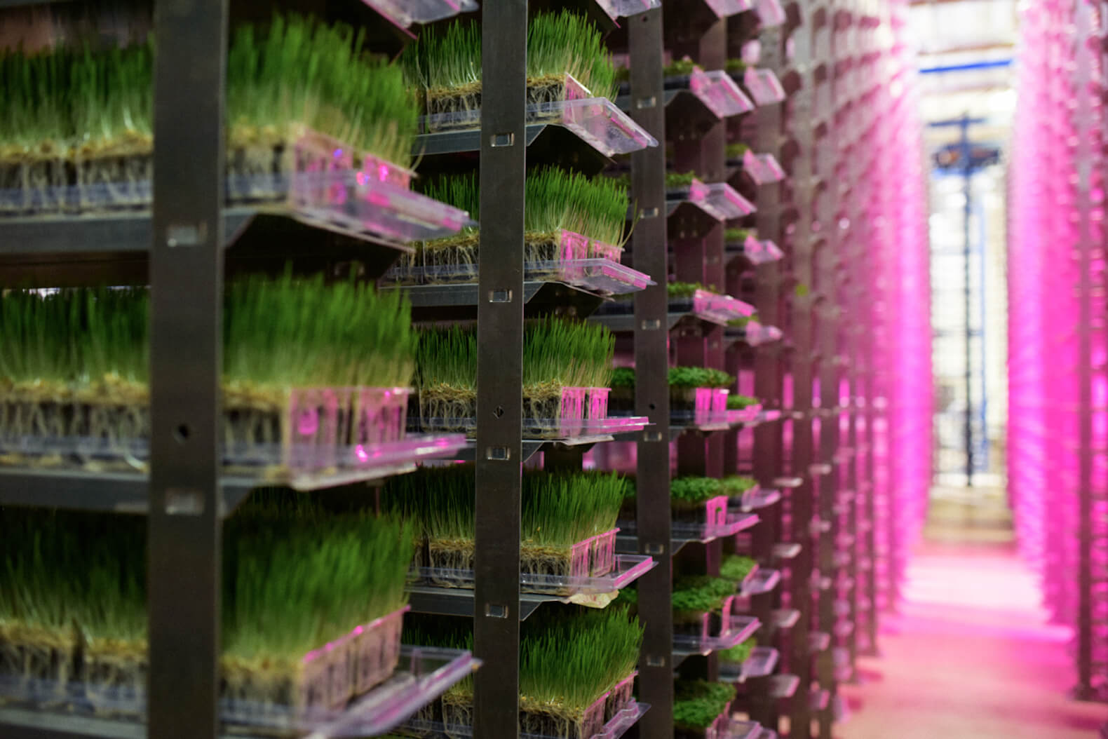 Urban Produce Indoor Vertical Garden