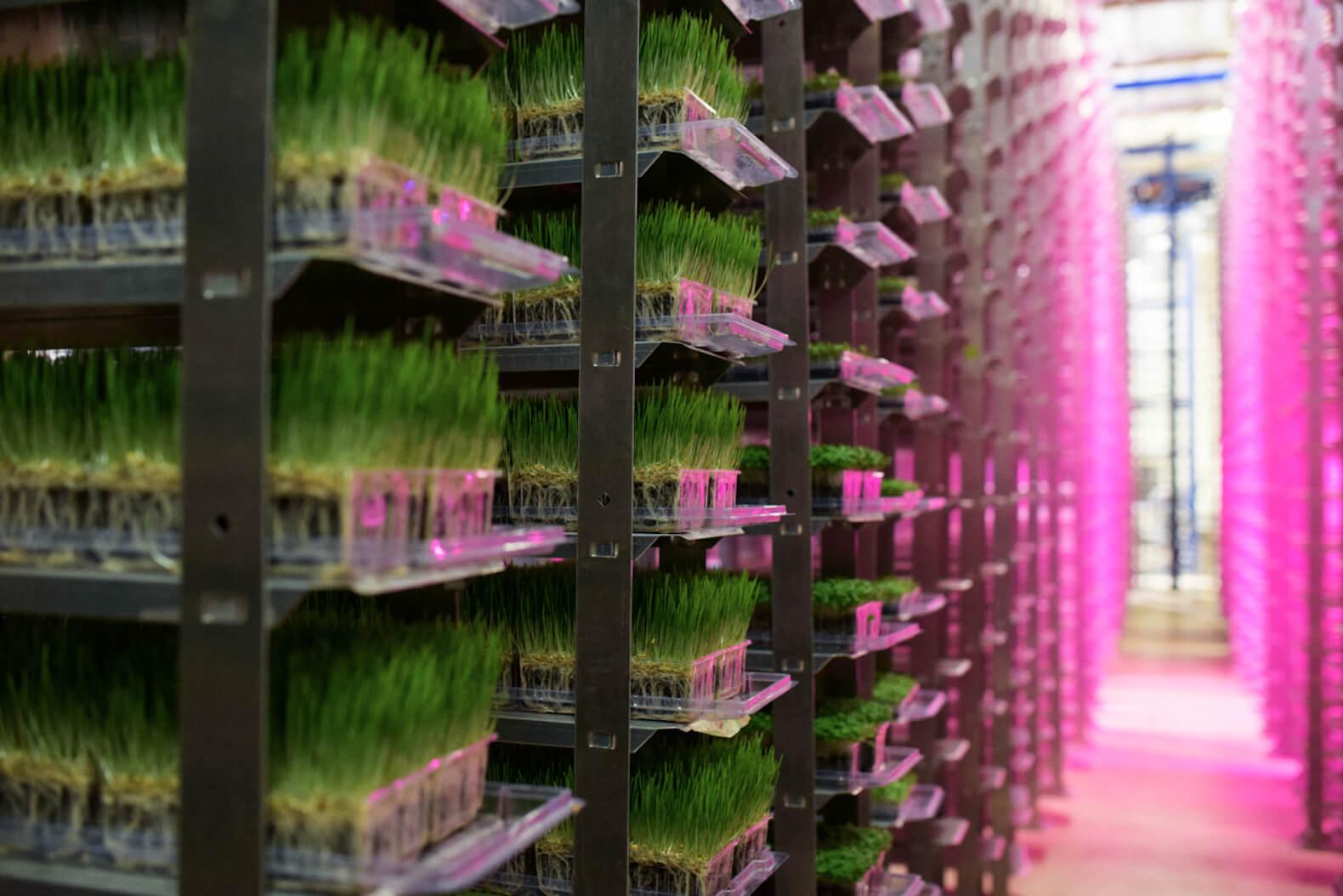 indoor agriculture farming 32727
