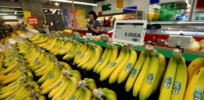 banana extinction