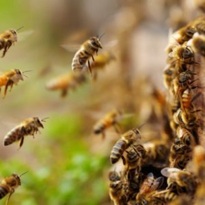 bees neonicotinoid insecticides 43727