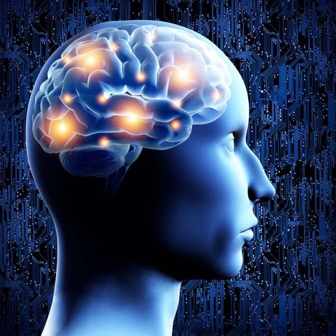 brain 3 1 18
