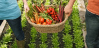 chemical gardening organic 437223