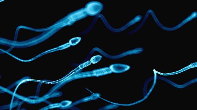fertility 3 8 18 2