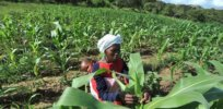 South African scientist: GMO crops can improve crop nutrients, boost Africa's agricultural productivity