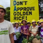 Golden Rice: Debunking Greenpeace's 'misinformed and politically motivated' claims against the vitamin-enhanced GMO crop
