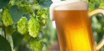GMO beer yeast hops 34827