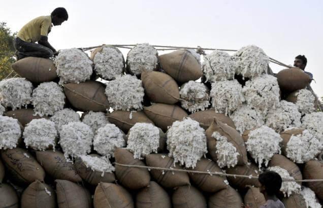 india cotton seed companies 43827