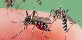 CRISPR-edited mosquitoes could dramatically reduce more than 200 million annual cases of malaria
