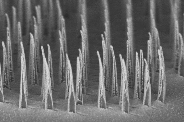 Safer and cheaper: New research in 'nanospears' could transform gene therapies