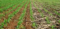 no till farming gmo 432727
