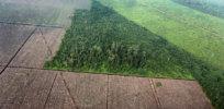 habitat loss 47327