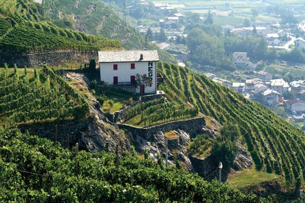 vineyard 3 13 18