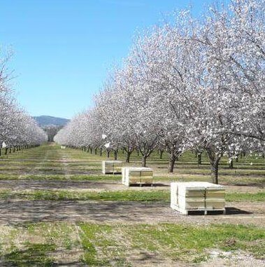 Bee boxes set up at an almond grove in California (Image credit: Claire Brittain/University of California - Davis)
