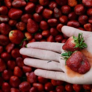 pesticides strawberries 328372