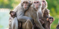 4-12-2018 monkeys2