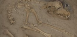 dog fossils found at two burial sites in illinois show that the domesticated pups lived years