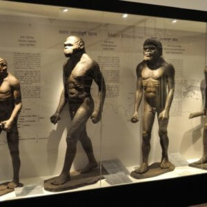 Human Evolution Biswarup Ganguly Wikimedia Commons x