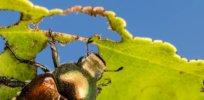 plant vaccine rna rnai spray crop 432737