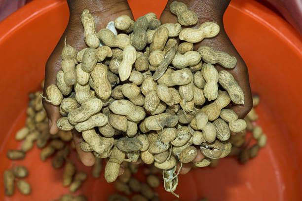 Peanut aflatoxins 32737
