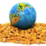 Viewpoint: Here's why organic farming needs GMOs