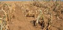 Mozambique drought 34282